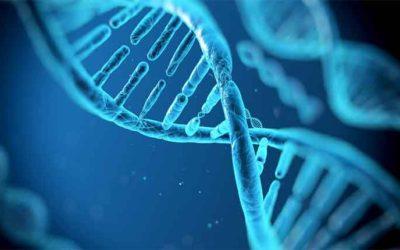 Epigenética y donación de óvulos: un enfoque práctico